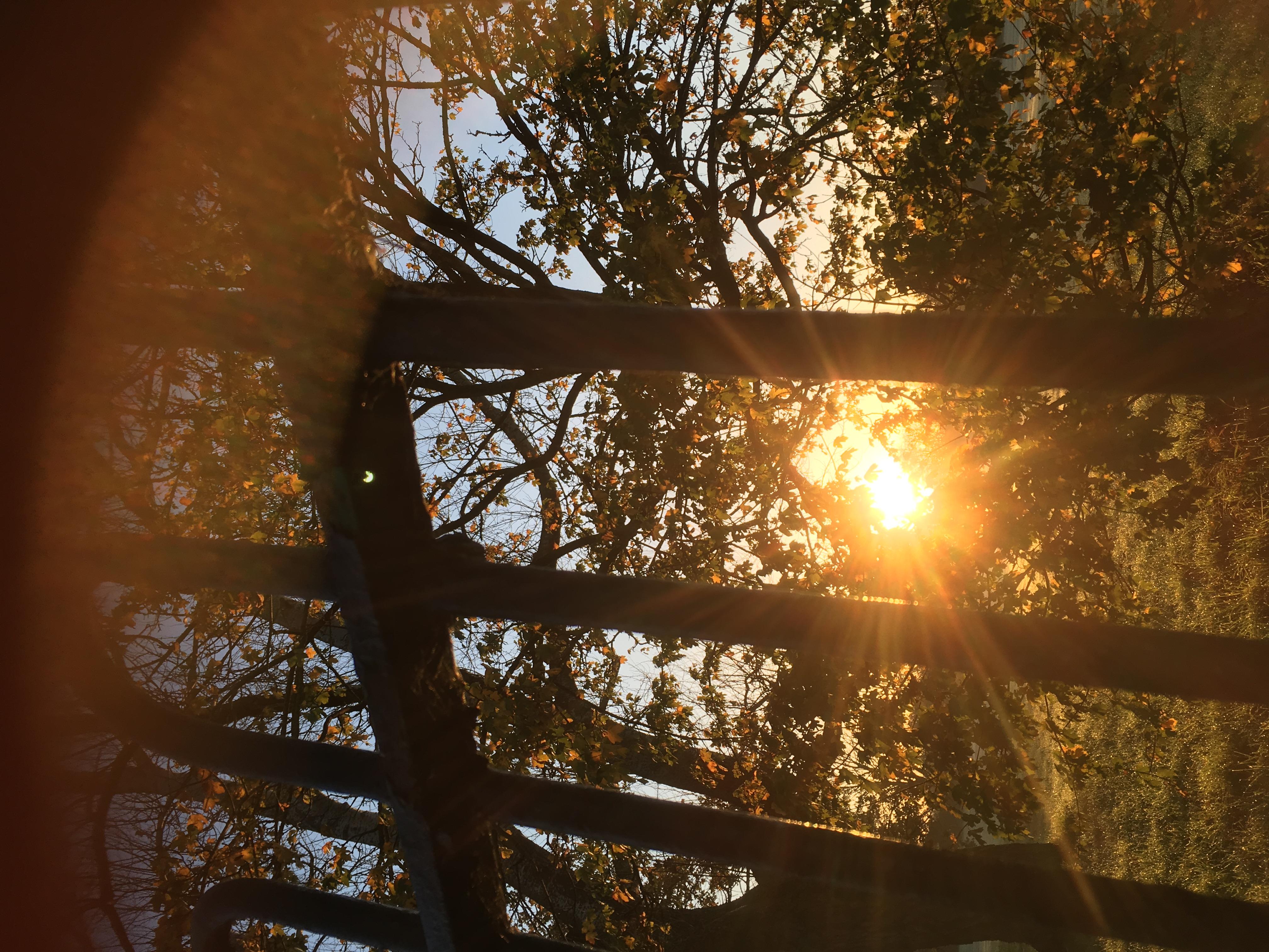 Shalini Sun Gate